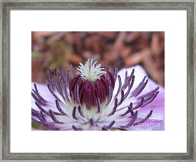 Framed Print featuring the photograph Awesome by Tina Marie