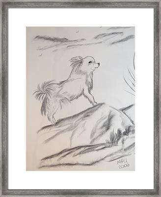 Aye Chihuahua Framed Print by Maria Urso