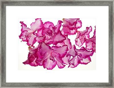 Azalea Abstract Framed Print by Brad Rickerby