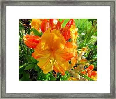 Azalea Flower  Framed Print by Joyce Woodhouse