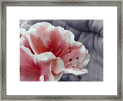 Azalea Framed Print by Luis oscar Sanchez