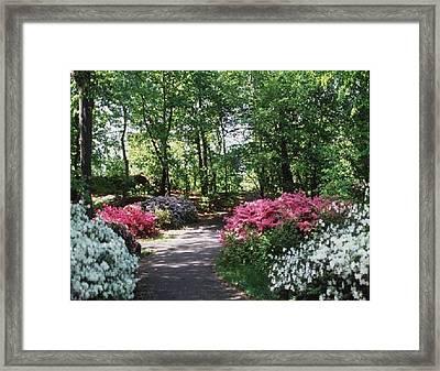 Framed Print featuring the photograph Azalea Path by Elizabeth Coats