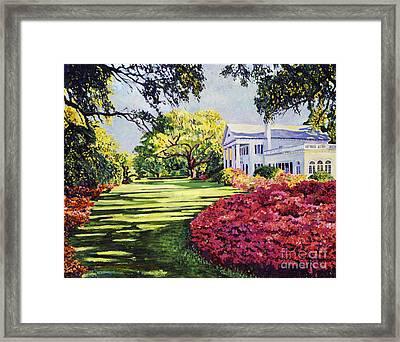 Azalea Spring Framed Print