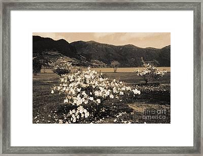 Azaleas By The Lake Framed Print by Gaspar Avila