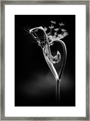 B Is For Bronze Fennel Framed Print