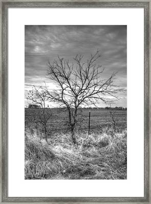 B/w Tree In The Country Framed Print by Peter Ciro
