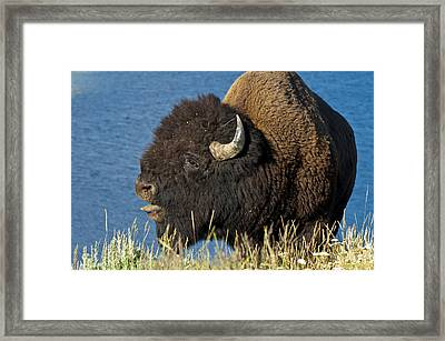 Baaa You Come Here Framed Print by Paul Cannon
