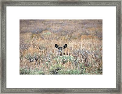 Framed Print featuring the photograph Babe In Hiding by Lynn Bauer