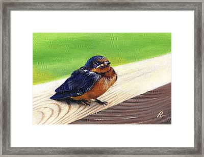 Baby Barn Swallow Framed Print by Peggy Dreher