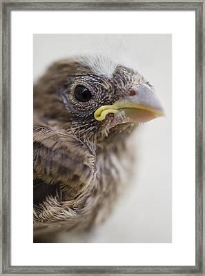 Baby Bird 3 Framed Print by Jessica Velasco
