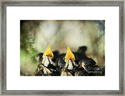 Baby Birds Framed Print