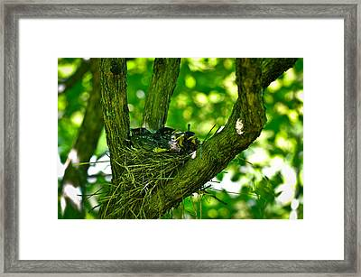 Baby Birds Framed Print by Erica McLellan