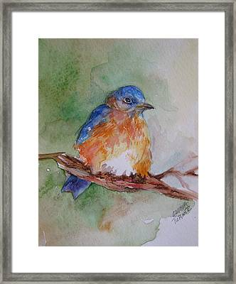 Framed Print featuring the painting Baby Blue Bird by Gloria Turner