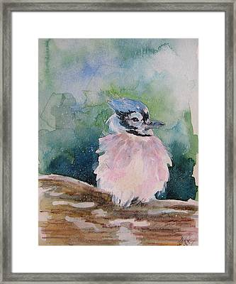 Framed Print featuring the painting Baby Blue Jay by Gloria Turner