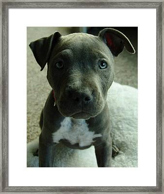 Baby Bluenose Framed Print