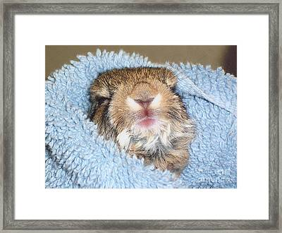 Baby Bunny Rabbit Framed Print by Marilyn Magee