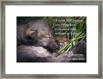 Baby Card - Timber Wolf Framed Print by Michael Cummings