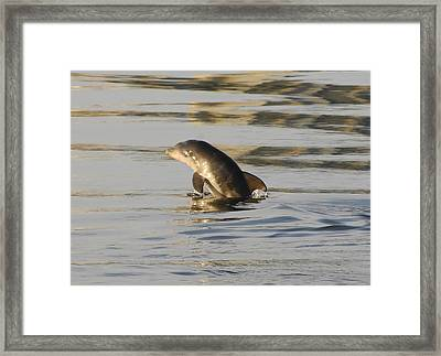 Baby Dolphin Framed Print by David Lee Thompson