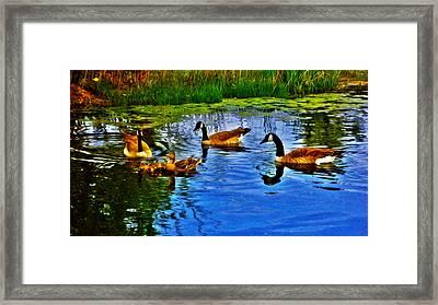 Baby Ducks Framed Print by Sergio Aguayo