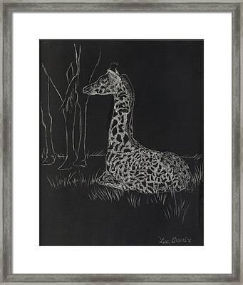 Baby Giraffe Framed Print by Lisa Guarino