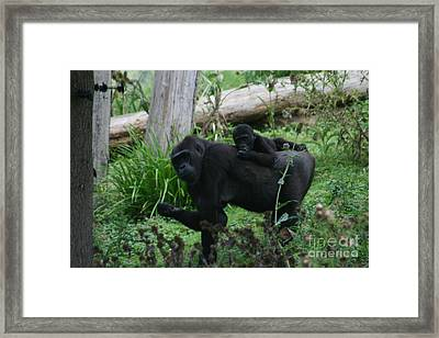 Baby Gorilla Framed Print by Carol Wright