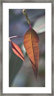 Framed Print featuring the photograph Baby Gum. by Carole Hinding