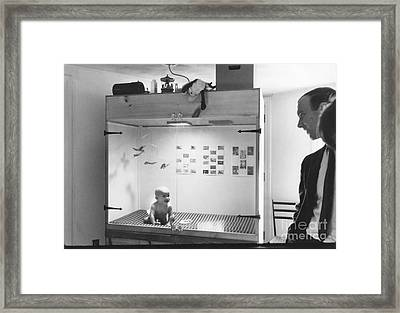 Baby In A Skinner Box Framed Print by Sam Falk