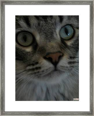 Baby Jeffrey Framed Print by Paula Greenlee