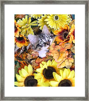 Baby Kitty Cat Munching Fall Leaves - Cute Kitten In Autumn Colors With Sunflowers - Fall Time Framed Print by Chantal PhotoPix