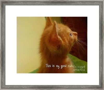 Baby Kitty Framed Print by Garnett  Jaeger