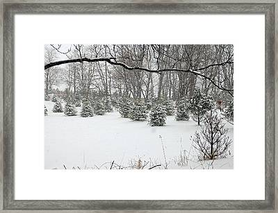 Baby Pines Framed Print by Aimee L Maher Photography and Art Visit ALMGallerydotcom
