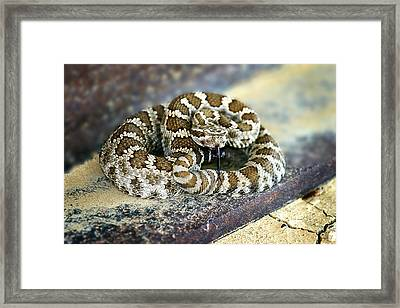 Baby Rattle Framed Print