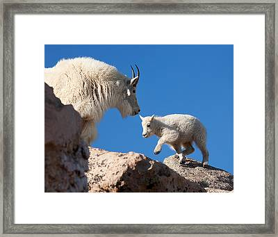 Framed Print featuring the photograph Baby Steps by Jim Garrison