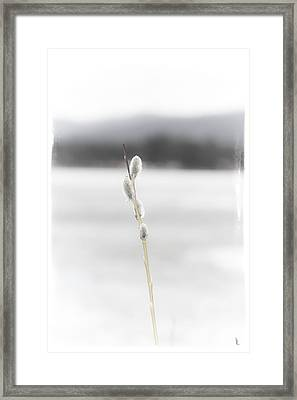 Baby Willows Framed Print by Janie Johnson