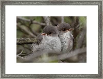Framed Print featuring the photograph Baby Wrens by Serene Maisey