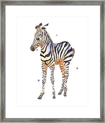 Baby Zebra Nursery Animal Art Framed Print