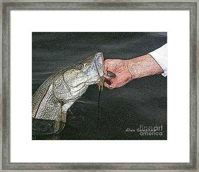 Back Bay Snook Framed Print by Alex Suescun