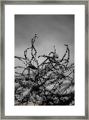 Back Into My Heart Framed Print by Dan Crosby