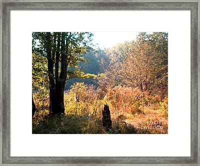 Framed Print featuring the painting Back Lit Trees by Gretchen Allen