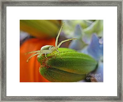 Framed Print featuring the photograph Back Off by Debbie Portwood