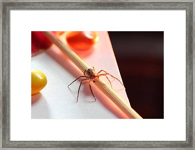 Back Off My M-m's Framed Print by Bill Tiepelman