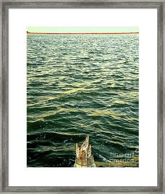 Back To The Sea Framed Print by Joe Jake Pratt