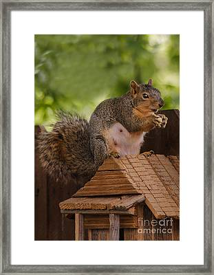 Back Yard Pet Framed Print by Robert Bales
