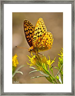 Backcountry Butterfly Le Framed Print by Greg Norrell