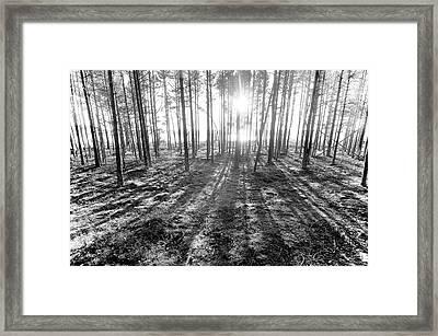 Backlight Framed Print by Micael  Carlsson