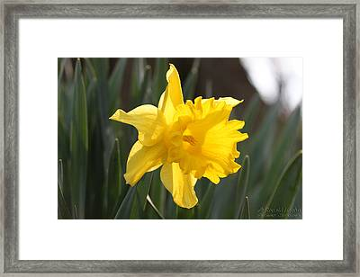 Backlit Beauty Framed Print