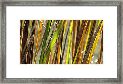 Backlit Grass Wc 2  Framed Print by Lyle Crump