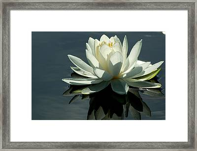 Backlite Lily Framed Print