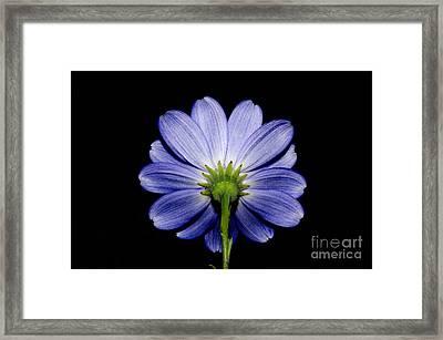 Backside Of A Blue Flower Framed Print