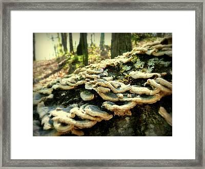 Backwoods Kentucky Fungi Framed Print by Cindy Wright